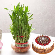 3 Layer Bamboo With Black Forest Cake: Birthday Cakes Dubai
