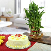 3 Layer Bamboo With Butterscotch Cake: Birthday Gifts
