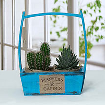 Lovely Succulents Combo: New Arrival Gifts in Dubai