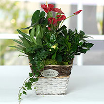 Mesmerising Green Basket Beauty: New Year Gifts
